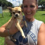 Gidget, 3 year old Chihuahua male.