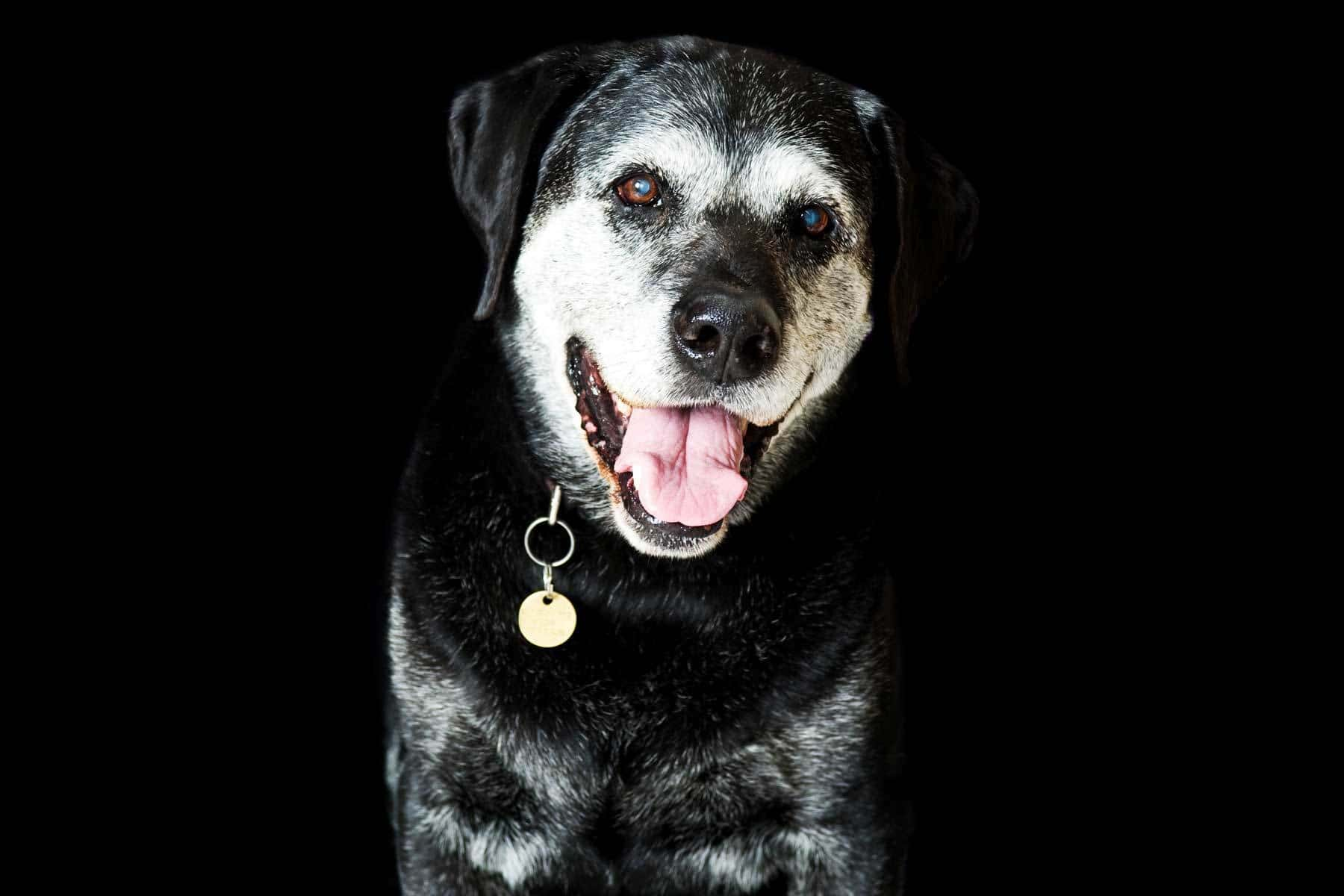 Things to know before adopting a senior dog