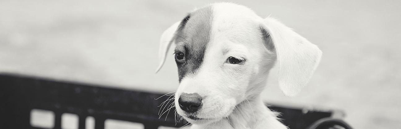 Sandton SPCA