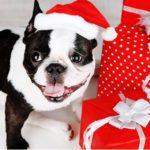 Sandton SPCA gift wrapping at Sandton City