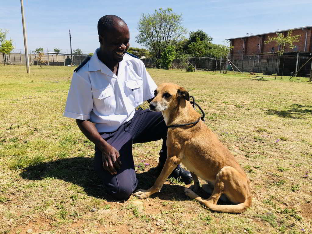Neglected security dog now safely at the SPCA