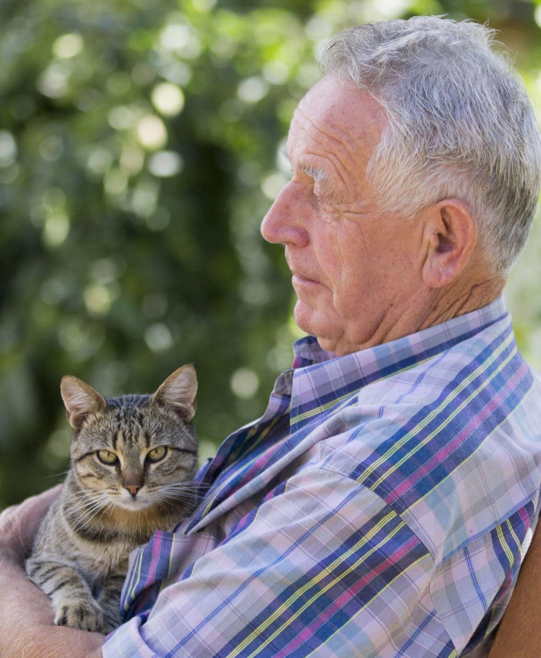 Don't forget your pets in your will - Sandton SPCA
