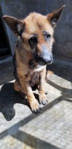 A happy ending to Zara's story - Sandton SPCA