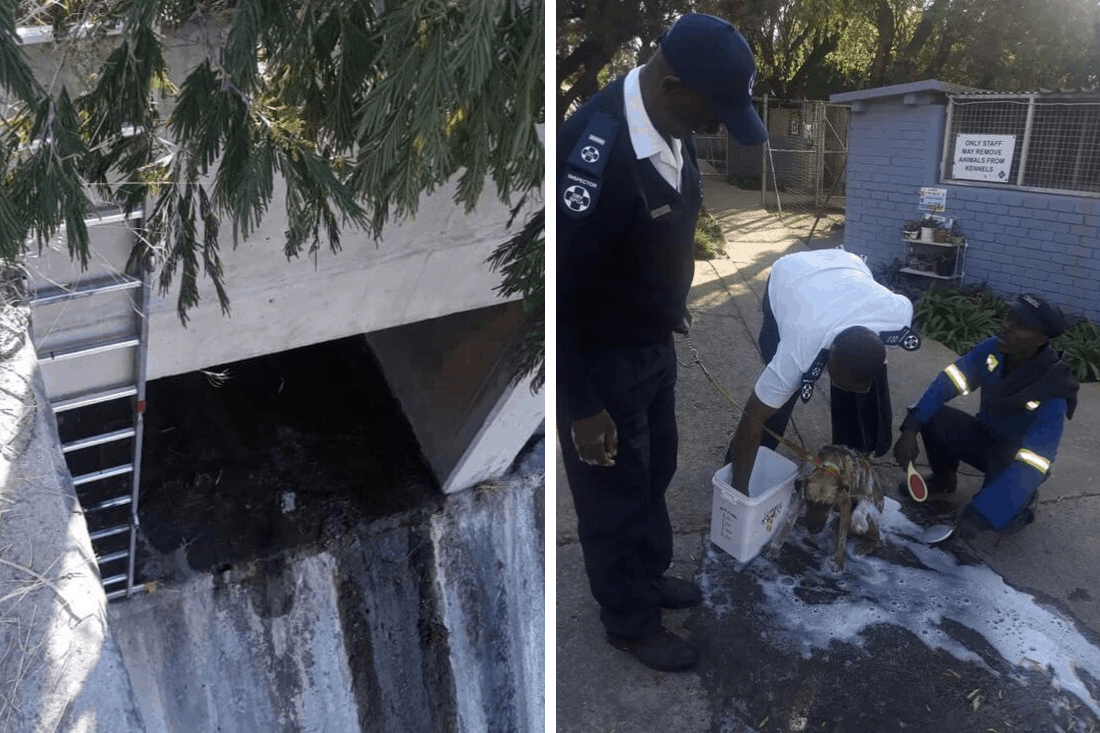 Dog trapped in drain rescued by Sandton SPCA
