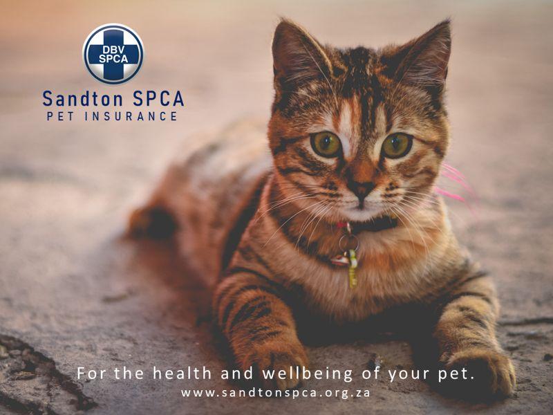 Sandton SPCA Pet Insurance