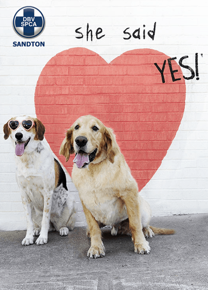 Back a Buddy Valentine's Day Fundraiser for Sandton SPCA
