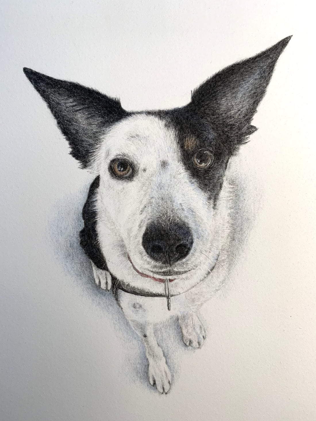 Thula sketched by Libby Redding